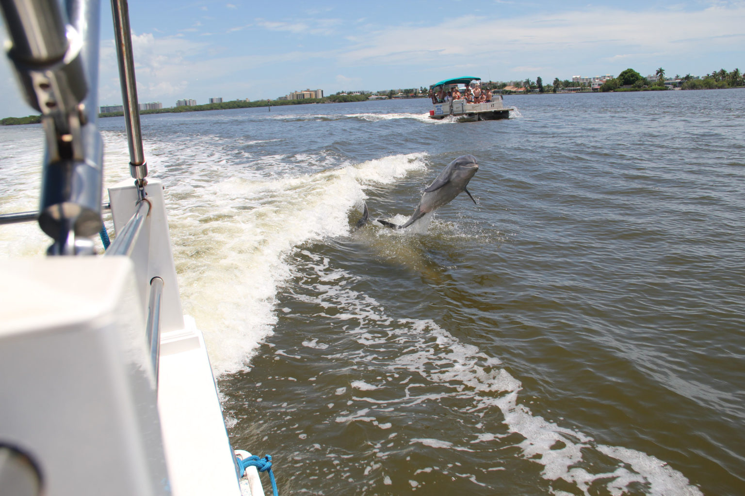 Dolfin-Tour-Fort-Myers-Beach